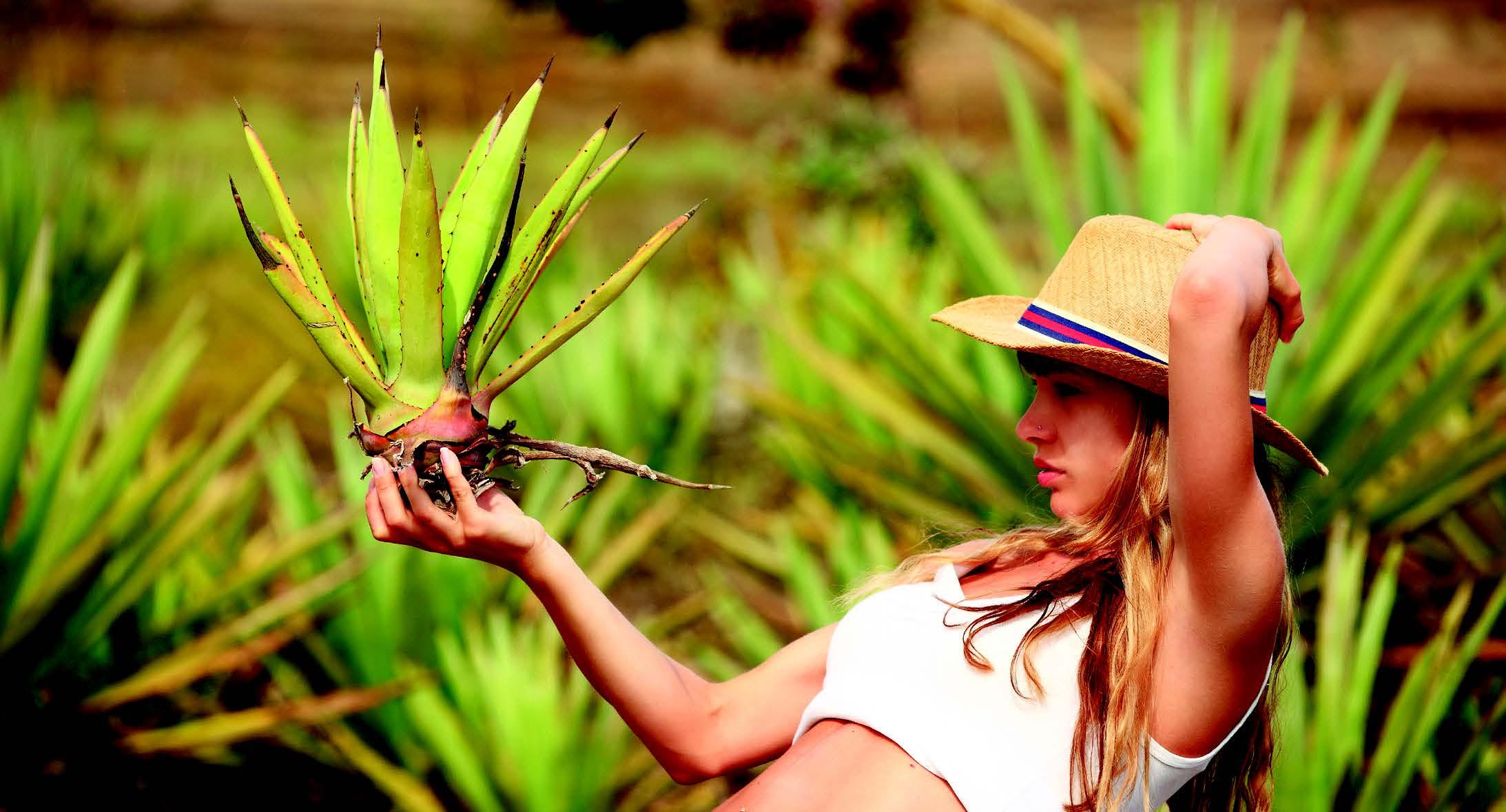 Ces plantes qui sauvent notre été